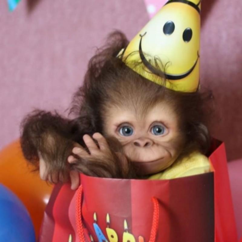 Realistic  Baby Monk...